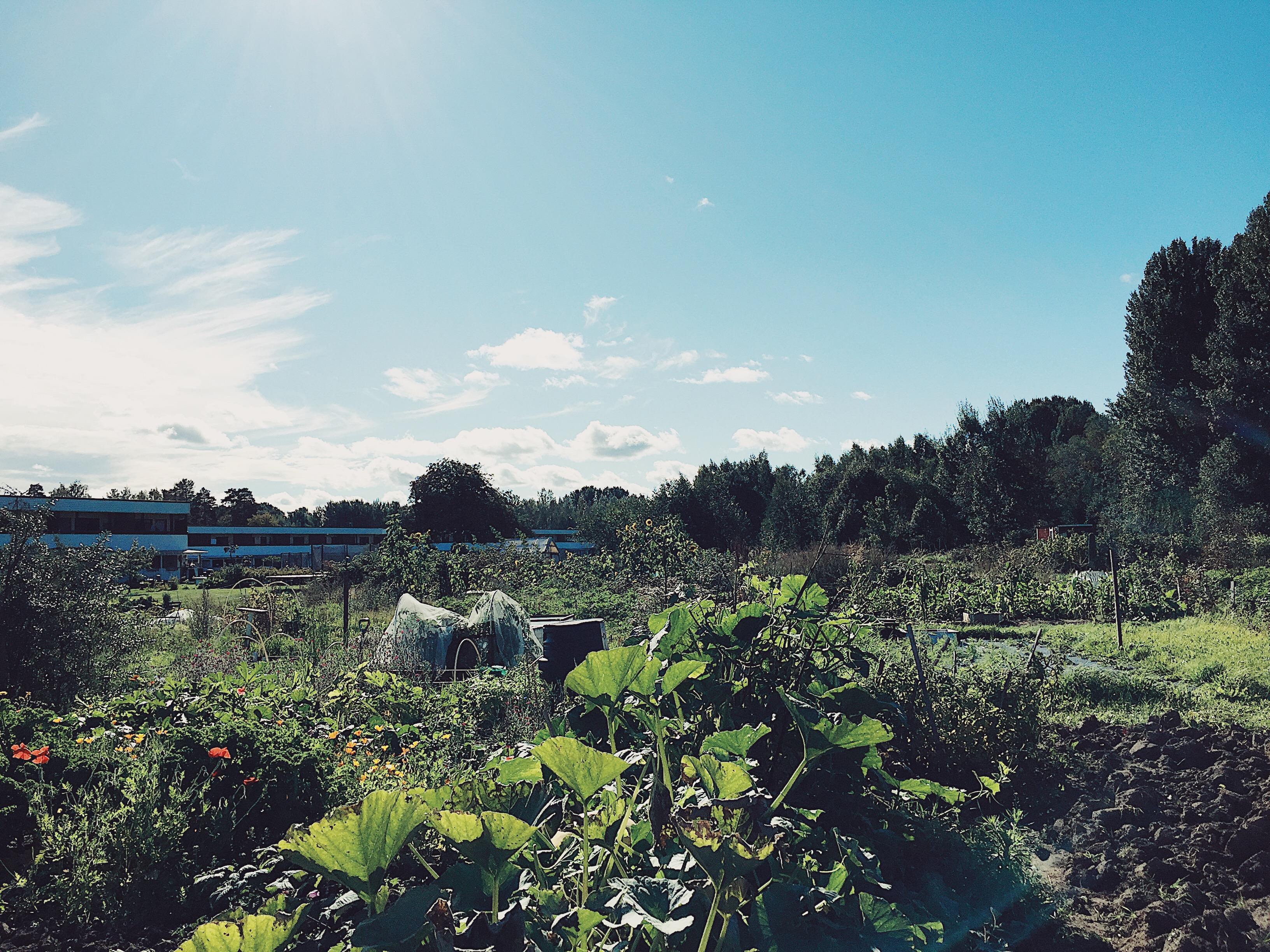 odligslott-selfsufficient-harvest-odla
