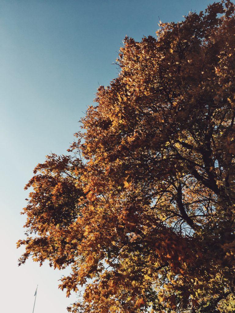 fall-slow-living