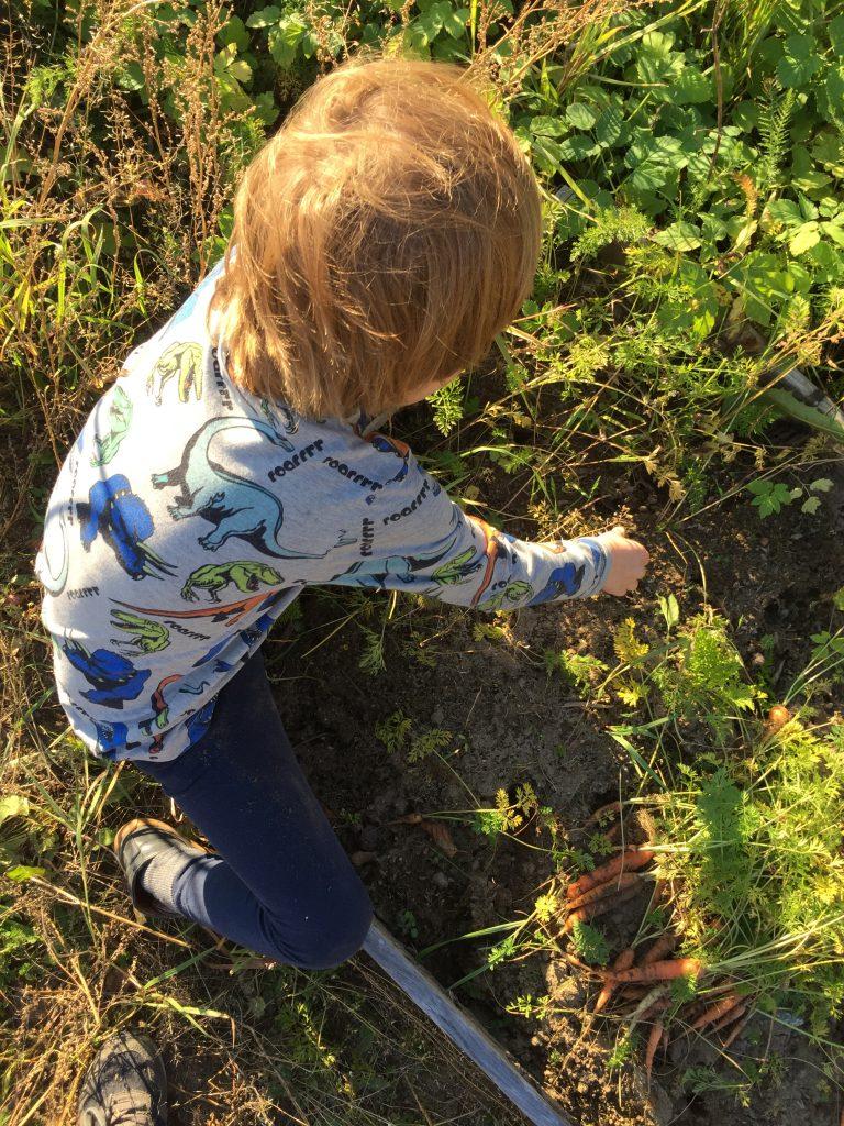 barn-odla-urban-garden