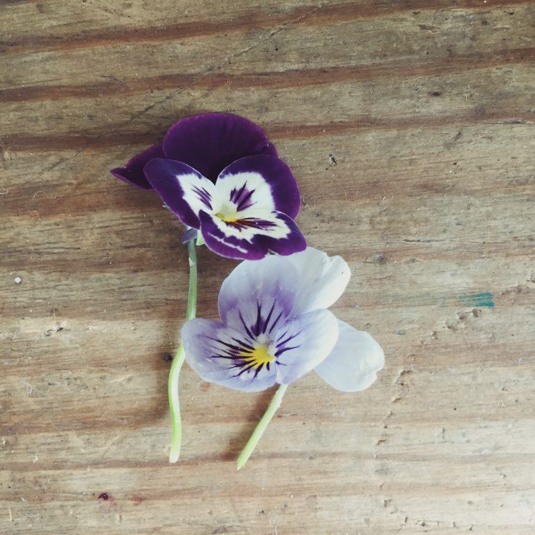 flower-summer-july