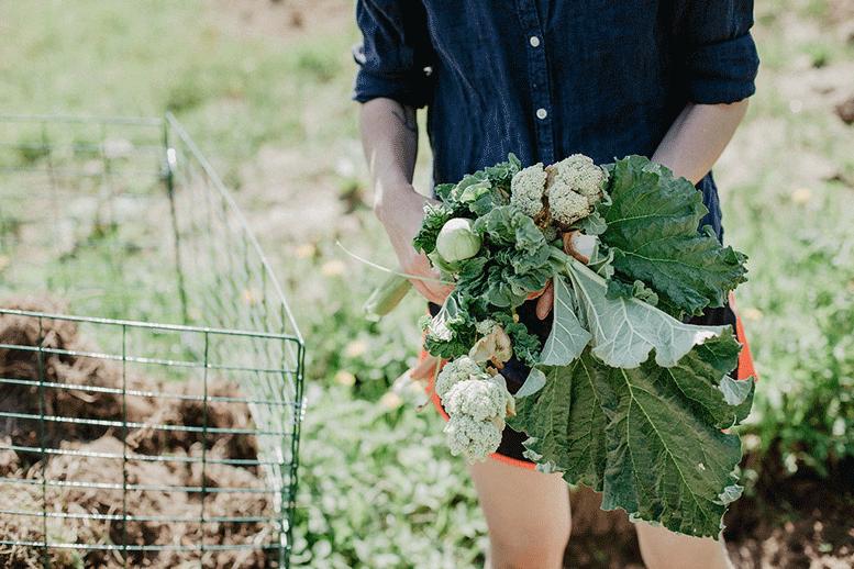 growing-selfsufficient-harvest-odla-linda-dahlqvist