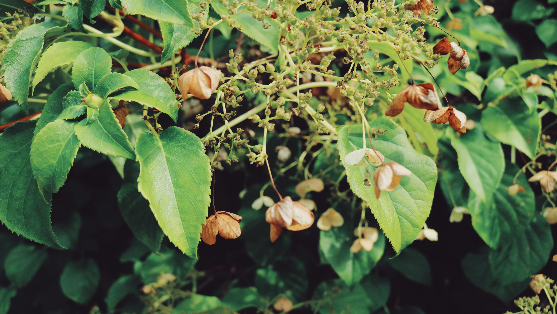 fall-uppsala-botaniska-tradgarden-garden