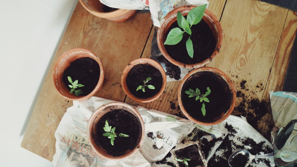 odla-urban-garden-tomater-sjalvforsorjande