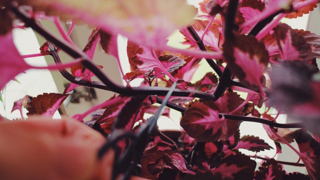 sticklingar-vaxter-cuttlings-gardening