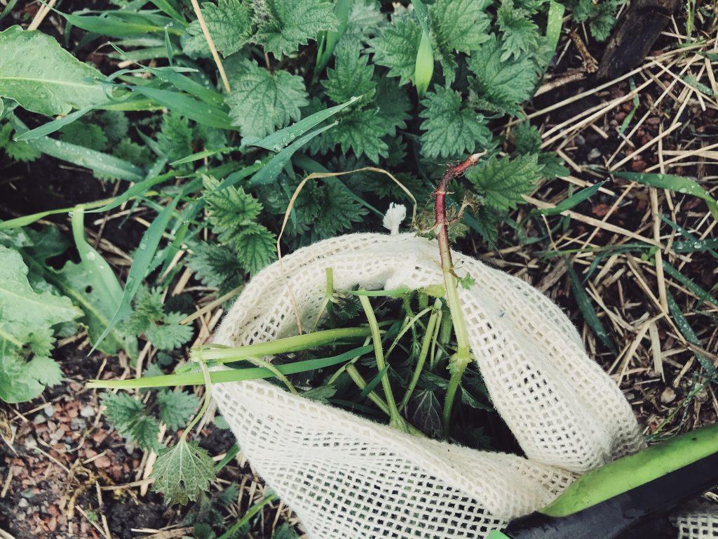 Nässelvatten – gratis växtnäring