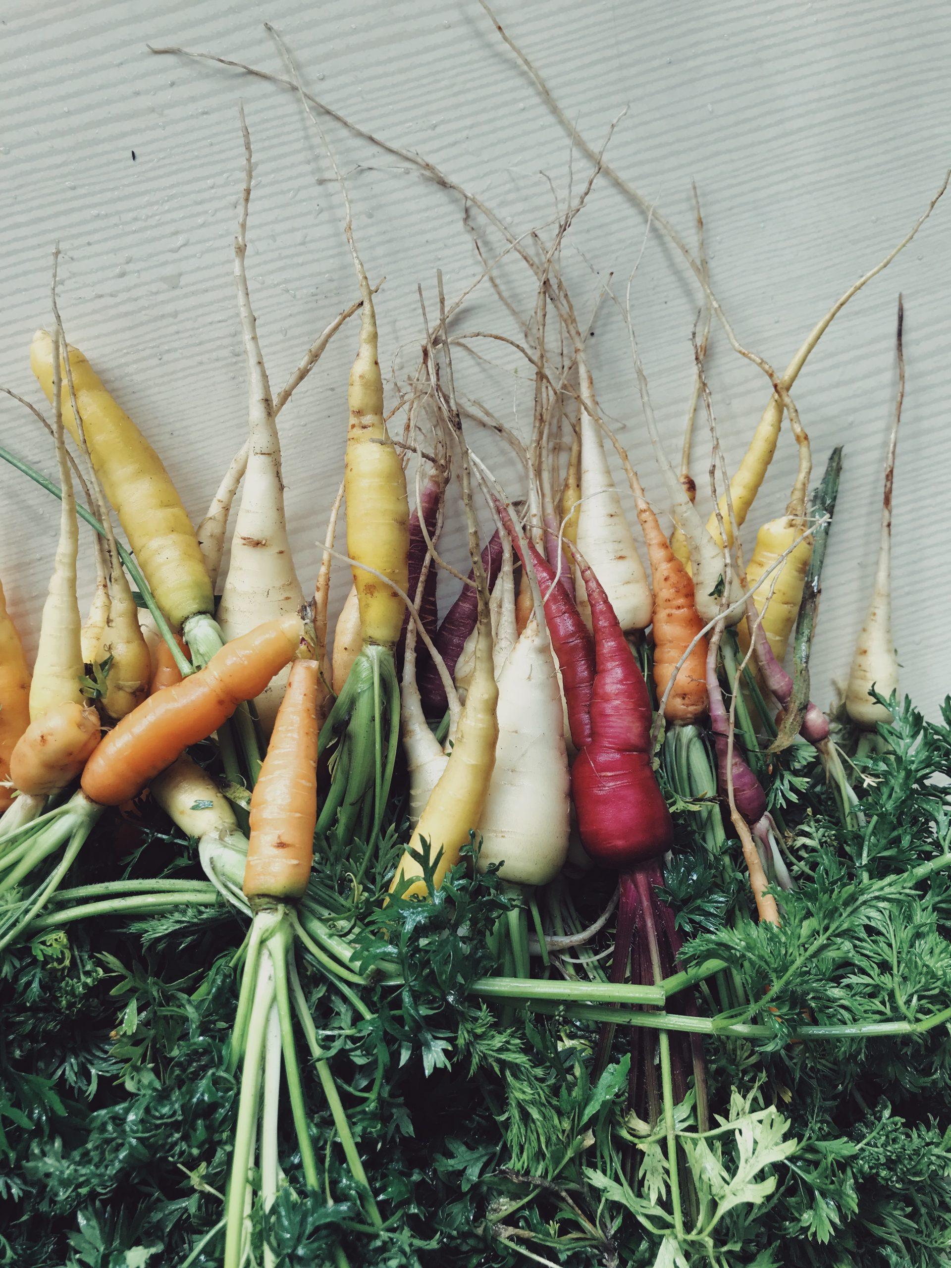 organic-vegetables-carrot-allotment-urban-garden